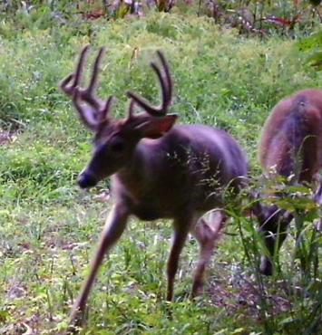 double beam buck 2.png
