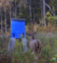 Another huge buck deer picture at Upton, KY, on land close to Louisville that is for sale.