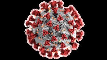 coronavirus-3992933_edited.png