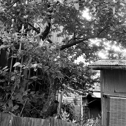 photo Kumano
