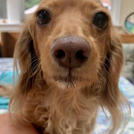 Dog-gone Quarantine