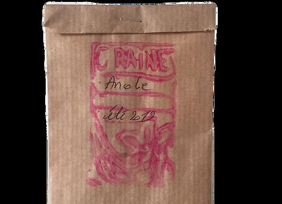 Graine d'Ancolie rose