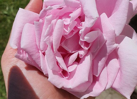 Tisane de Rose