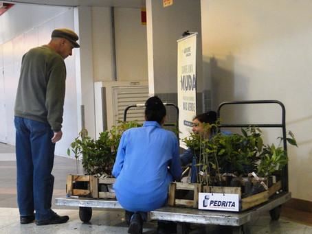 Pedrita e Angeloni distribuem mais de 2 mil mudas no Dia da Árvore