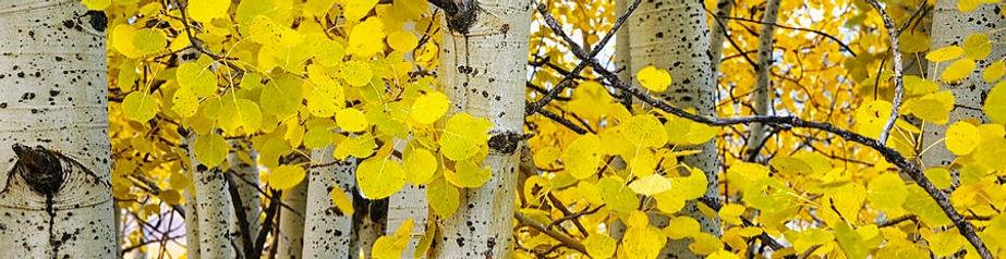 aspens-at-autumn-andrew-soundarajan_edit