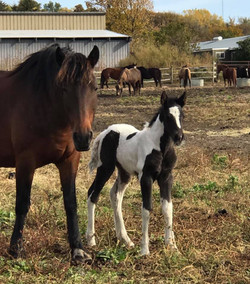 Filly4