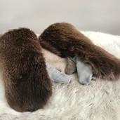 Beaver fur mittens with trigger finger