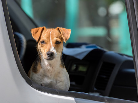 Step-By-Step Instructions for Using Fur Baby Tracker for Curbside Pick-Up