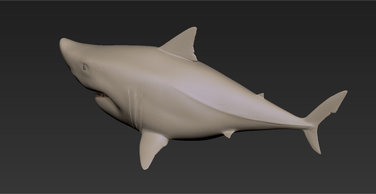 Shark_Gray02