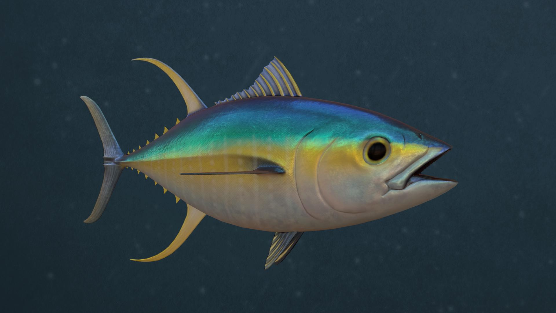 Tuna02