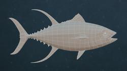 Tuna05