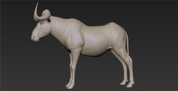 Wildebeest_Gray_02