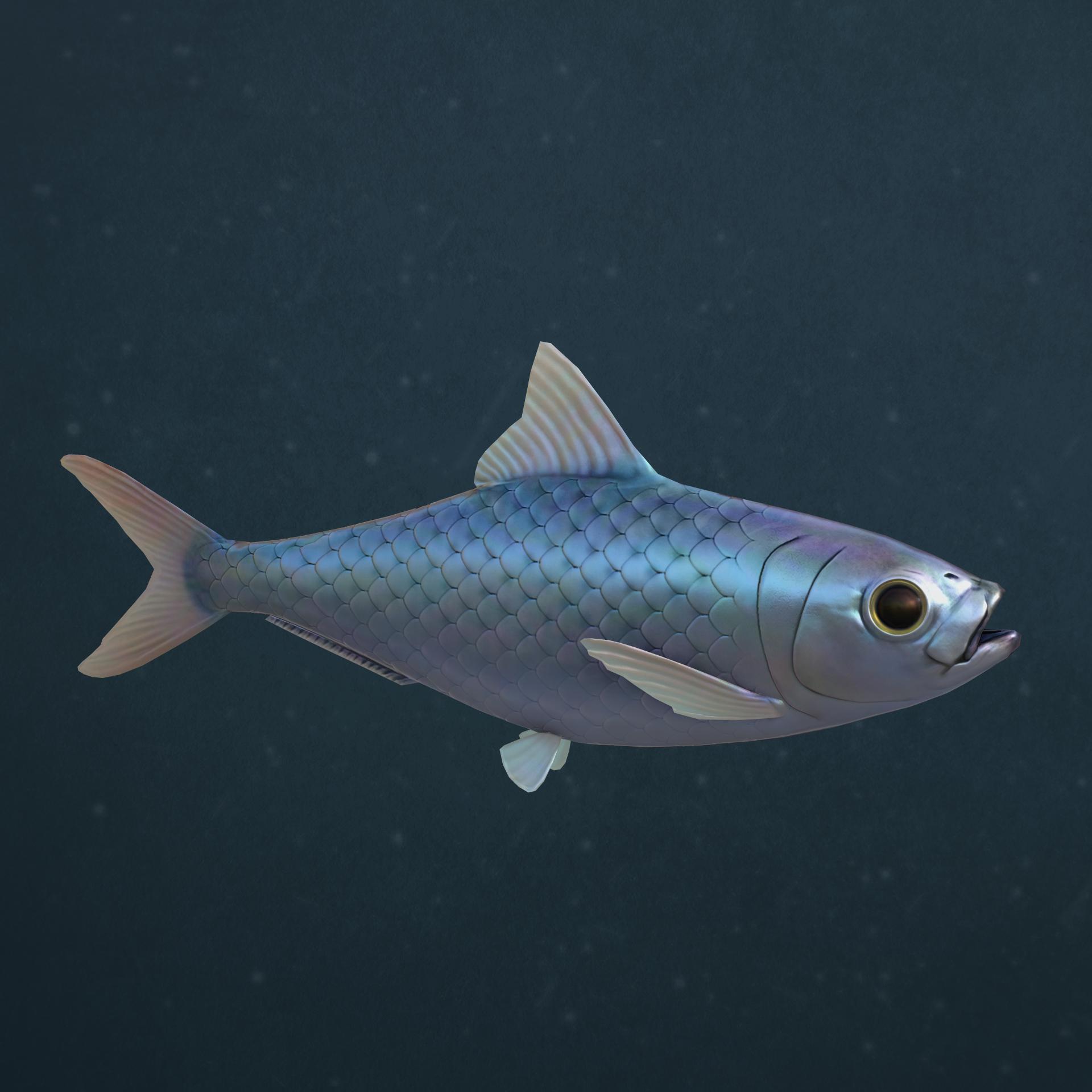 Sardine06