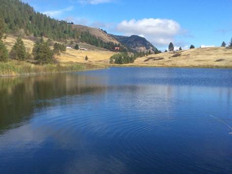 Goldfish reported in Saddle Lake