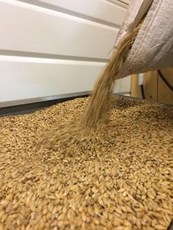 Grain de Malt Orge