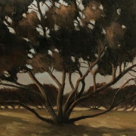 South Beach trees