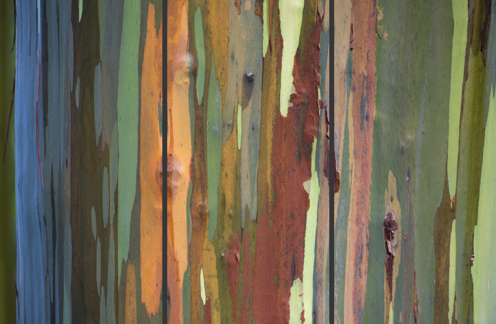Painted Woods Triptych