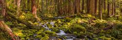 Rainforest Cascades