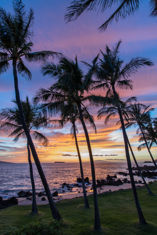 Maui Dreams