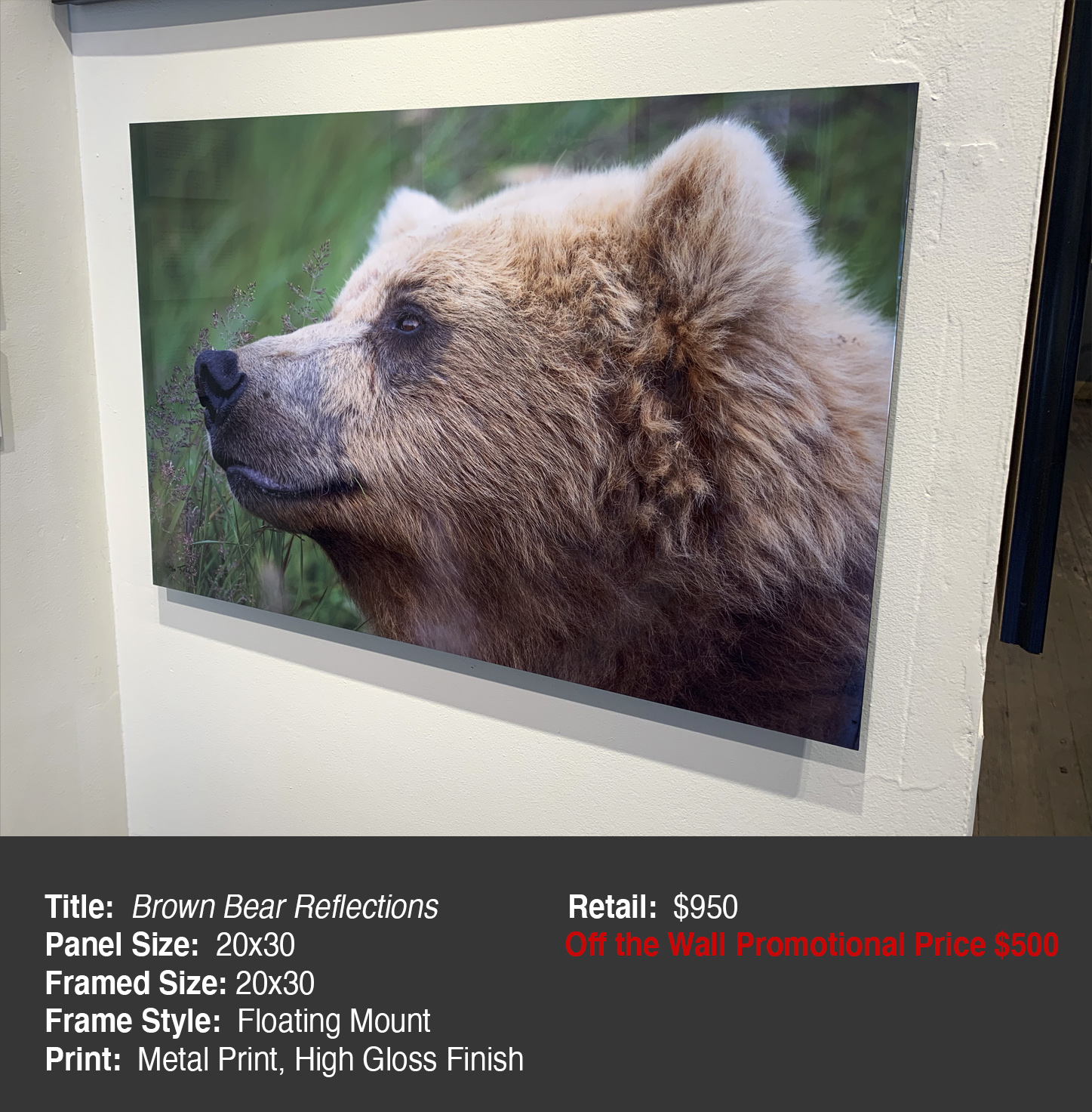 Brown Bear Reflections 20x30