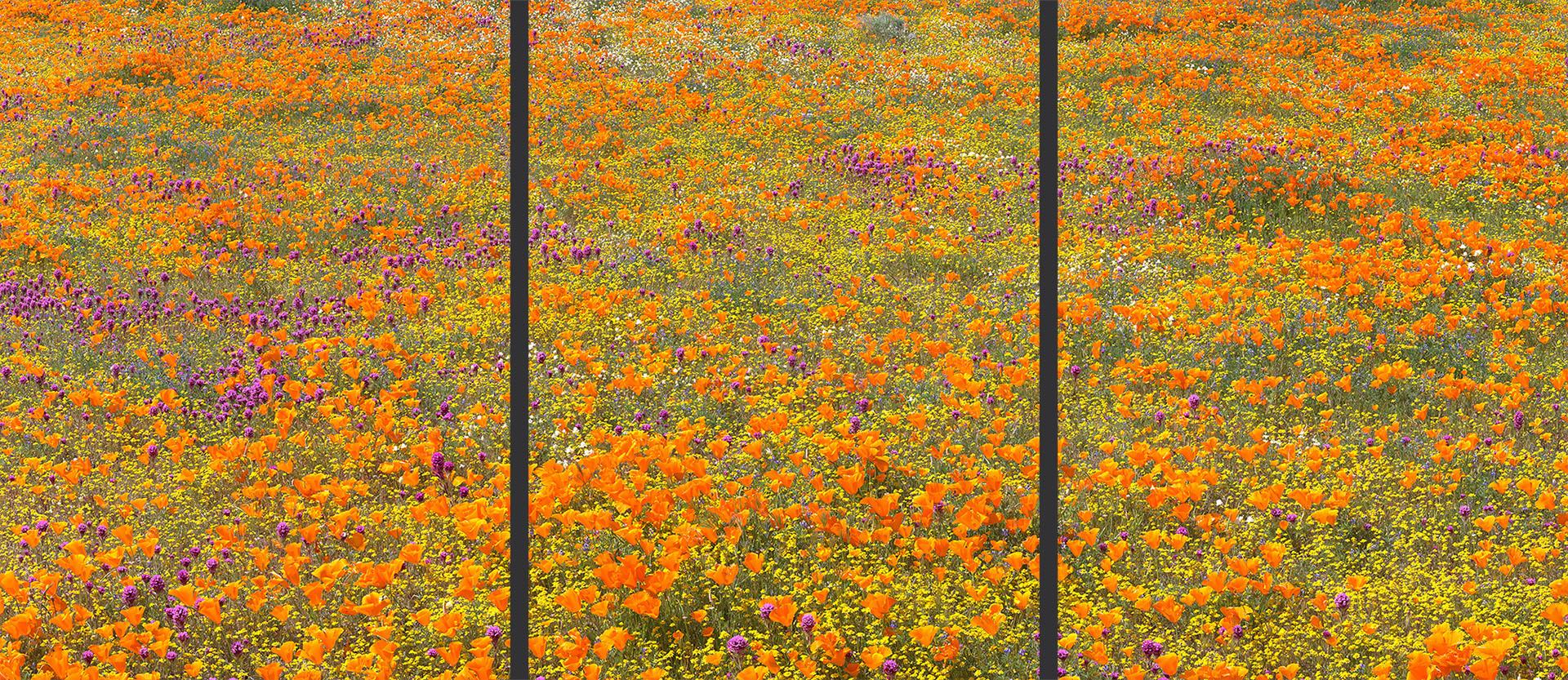 Wildflower Palette Triptych