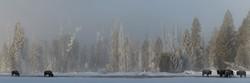 Winter's Refuge