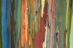 Painted Woods Full Image (14x20, 20x30,