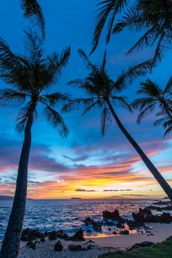 Maui Dreams Too