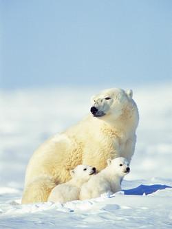 Polar Promise