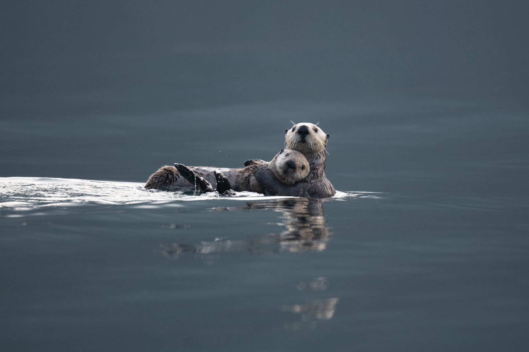 Two Sea Otterrs