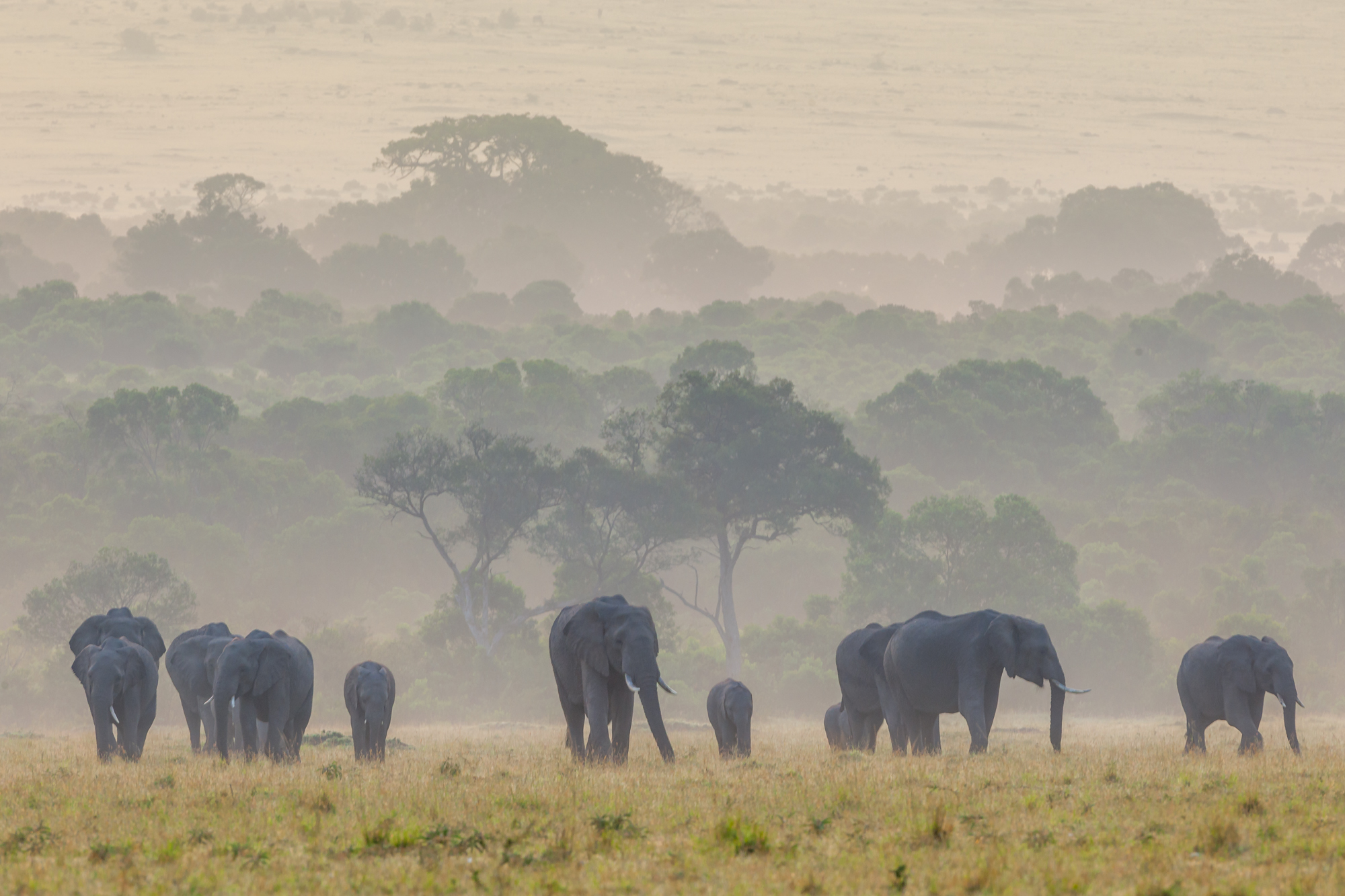 Daybreak on the Mara