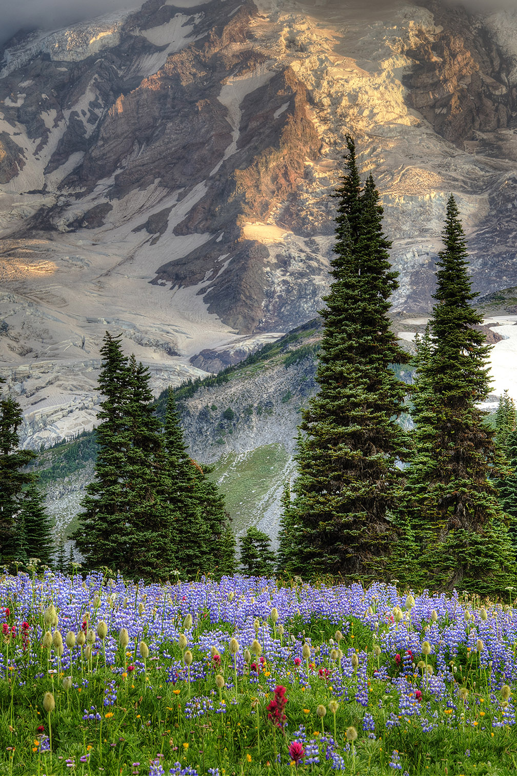 Glaciers and Lupines