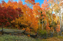 Autumn Fences