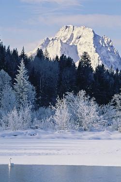 Shades of Winter