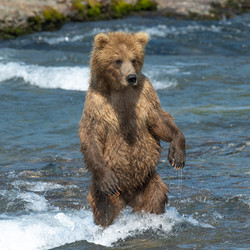 River Dance Cub