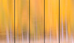 Autumn Reflections 5 panel (5-10x30, 15x45, 20x60)