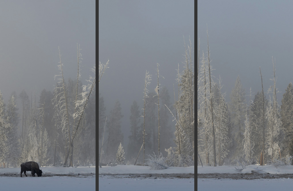 Winter's Refuge Triptych
