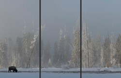 Winter's Refuge Triptych