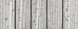 Winter Aspens 5 Panel