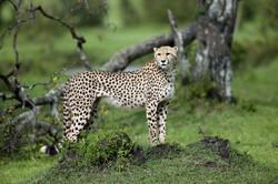 Mara Hunter