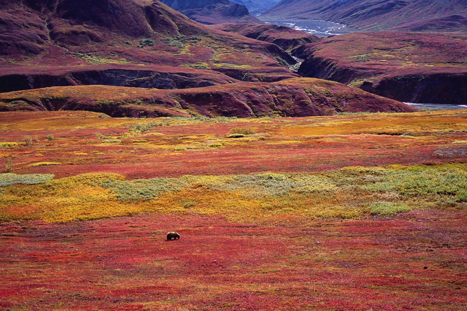 Tundra Traveler