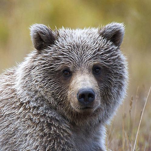 Cub Close-Up