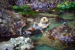 Sea Otter Suprise