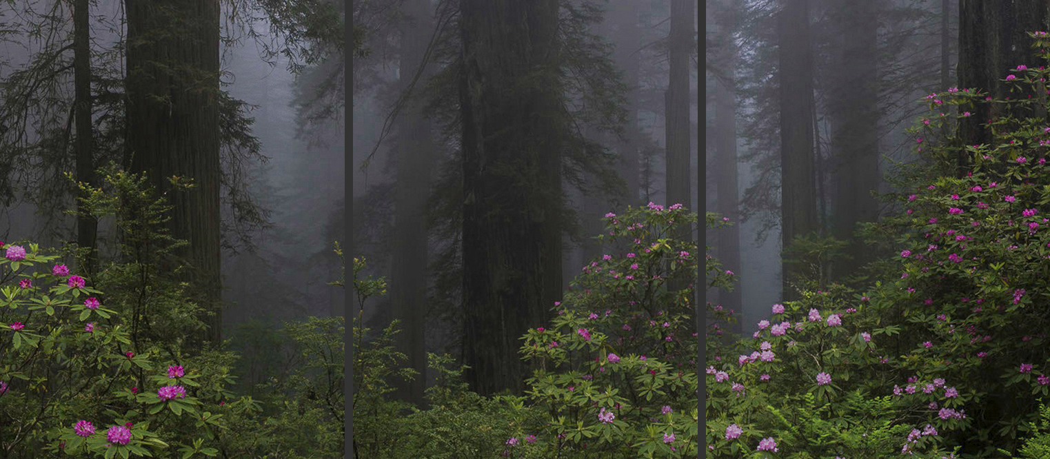 Springtime in the Redwoods Triptych