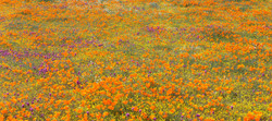 Wildflower Palette