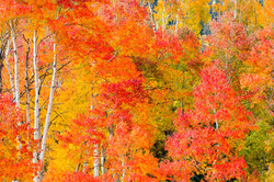 Autumn's Apex