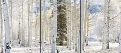 First Snow Triptych