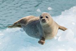 Harbor Seal Haven