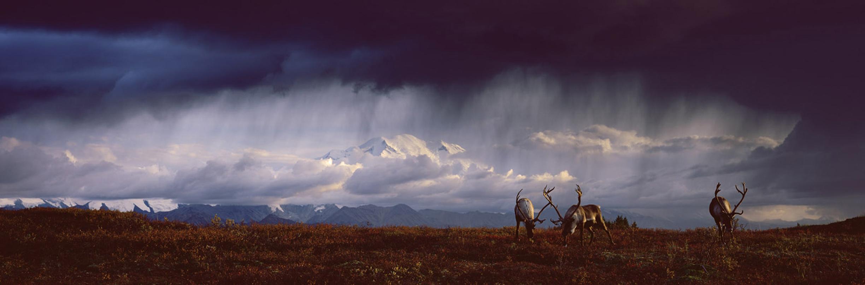 Tundra Thunder