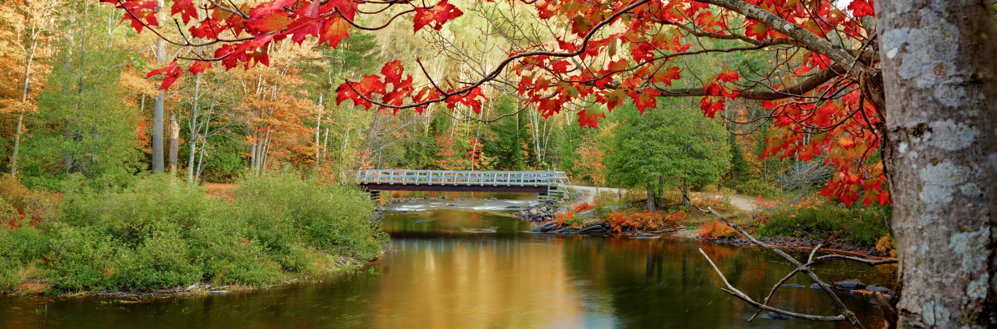 Maple and Bridge